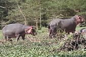 非洲- 肯亞-尚比亞-辛巴威2014-8-13:肯亞照片2014-8-13日照片 230.jpg