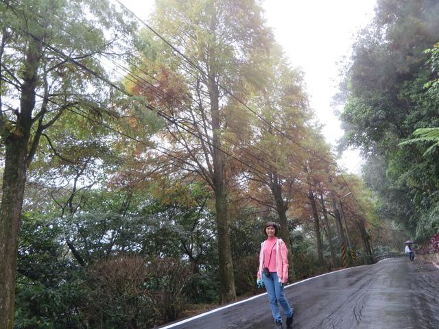 千島湖 (3).JPG - 北部一日遊
