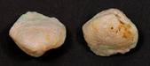 我的相簿:Rough opal