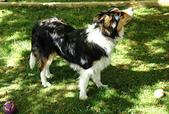 我的相簿:My dog