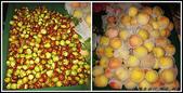 香港 深圳 西安:棗子+水蜜桃