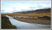 2009 絲路 新疆:清晨路上羊群