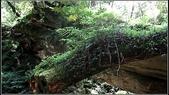 拉拉山_太平山_北橫兩日遊:路旁枯倒的巨木上附生多樣的植物.jpg