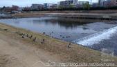 【就愛跑步】京都 鴨川慢跑:1711-慢跑鴨川-16.jpg