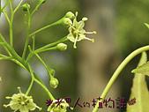 植物課-青楓:照片03 (06).jpg