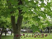 植物課-青楓:照片04 (01).jpg