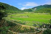 竹子湖。繡球花:IMG_13669.jpg
