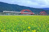 花東縱谷。油菜花:IMG_12444-10.jpg