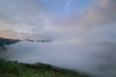 竹子湖。繡球花:IMG_13675.jpg