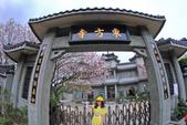 櫻。東方寺:IMG_12978.jpg