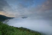 竹子湖。繡球花:IMG_13676.jpg