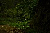 夜。螢火蟲:IMG_9696.jpg