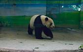 遊。木柵動物園:IMG_0016.jpg