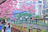 櫻。希望之河:IMG_8368.jpg