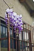 紫藤の恋。:IMG_3337.jpg