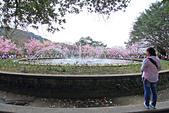 昭和櫻。:IMG_7851.jpg