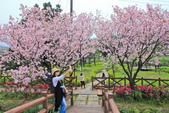 櫻。三生步道:IMG_8393.jpg