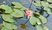 植物園。:IMG_4217.jpg