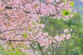 櫻。三生步道:IMG_8397.jpg