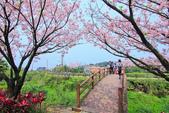 櫻。三生步道:IMG_8383.jpg
