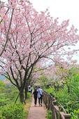 櫻。三生步道:IMG_8394.jpg