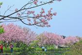 櫻。三生步道:IMG_8403.jpg