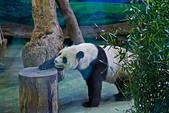遊。木柵動物園:IMG_0020.jpg