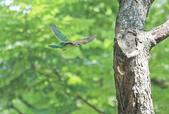 五色鳥。:IMG_10201.jpg