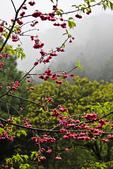 九族。櫻花季:IMG_46514.jpg