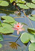 植物園。:IMG_4218.jpg