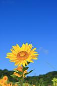 向日葵。:IMG_2849.jpg