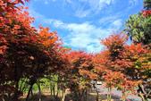 春の槭。: