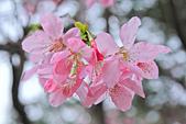 昭和櫻。:IMG_7840.jpg