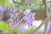 紫の浪漫。:IMG_8589.jpg