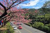 櫻。花園新城:IMG_7573.jpg