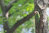 五色鳥。:IMG_10200.jpg