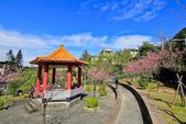 櫻。屈尺公園:IMG_7524.jpg