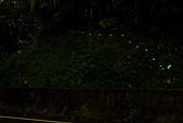 夜。螢火蟲:IMG_9688.jpg