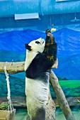 遊。木柵動物園:IMG_0021.jpg