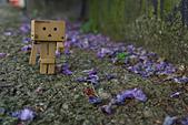 紫藤の恋。:IMG_3338.jpg