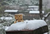 雪。陽明山:IMG_7201.jpg
