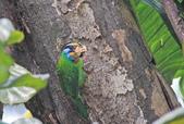 五色鳥。:IMG_10240.jpg