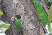 五色鳥。:IMG_10245.jpg