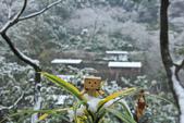 雪。陽明山:IMG_7203.jpg