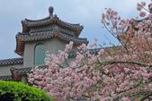 櫻。東方寺:IMG_12986.jpg
