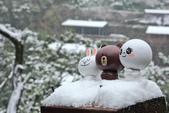 雪。陽明山:IMG_7212.jpg