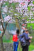 櫻。陽明山:IMG_8670.jpg