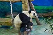 遊。木柵動物園:IMG_0023.jpg
