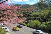 櫻。花園新城:IMG_7572.jpg