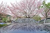 櫻。陽明山:IMG_8675.jpg